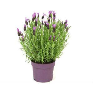 Ανθοφόρα Φυτά Εσωτ. Χώρου